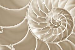 de-spiraal-van-fibbonachi-nautilus-shell-7015319
