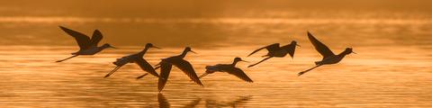 vogels-haptotherapie-soest